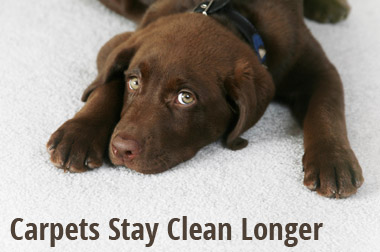 Carpets Stay Clean Longer